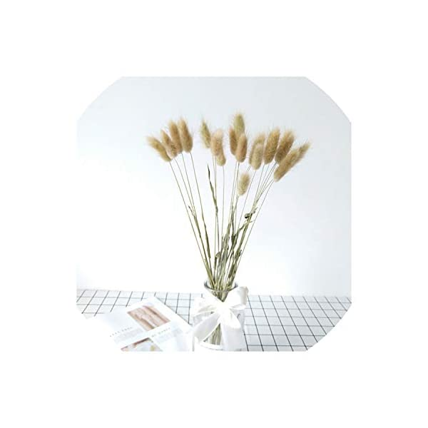 20pcs Natural Dried Flowers White Artificial Flowers Colorful Fake Rabbit Tail Grass Foxtail Bouquet Long Bunches,Brown