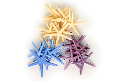 Purple, Blue, and Natural Finger Starfish for Decoration, 24