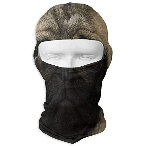 Balaclava Portrait Of A Young Pug. Close Up. Full Face Masks UV Protection Ski Hat Headwear Motorcycle Hood For Cycling Hiking Women Men