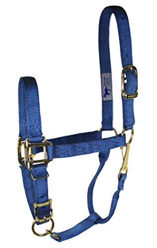 Hamilton 1-Inch Nylon Adjustable Quality Halter with Chin Snap for 800 to 1100-Pound Horse, Average, Ocean Blue - Hamilton Horses Halter