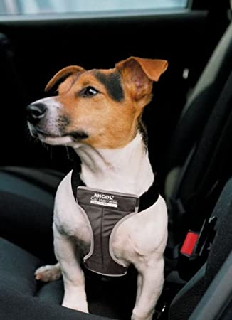 Ancol Car Travel Harness Small Pet Supplies
