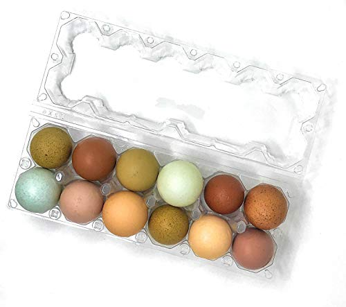 12 Pack Premium Clear Plastic Reusable Dozen Egg Container Carton with Labels holds 12 Large Eggs ()