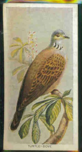 Turtle-Dove 1939 Carreras Cigarettes Birds of the Countryside #43 (VG+)