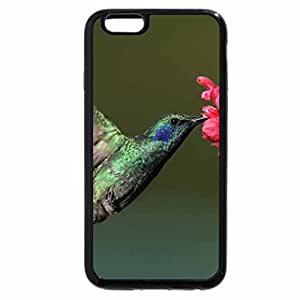 iPhone 6S / iPhone 6 Case (Black) Humming Bird Eating Nectar