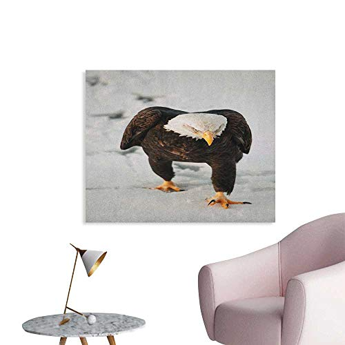 - Anzhutwelve Eagle Wallpaper Majestic Bird Walking on The Snow and Leaving Traces Looking for Prey Poster Paper Dark Brown Coconut Apricot W32 xL24