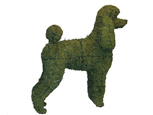 Frame Poodle (Poodle 17