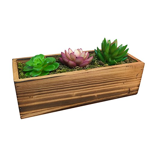 Country Succulent Decorative Windowsill Container