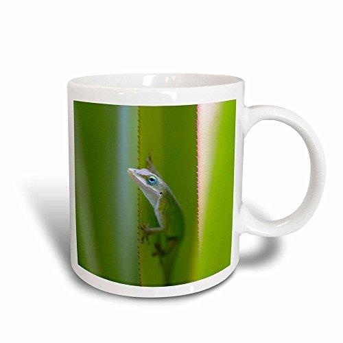 "3dRose 143919_3""Green Anole, Arboreal Lizard, Kauai, Hawaii, Usa Mug, 11 oz, Black/White"