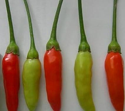 Thai Orange Chilli A Great Looking Medium Hot Chilli Pepper 10 Seeds