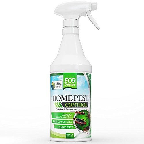 Spray Spider Mites (Eco Defense Organic Home Pest Control Spray, 16oz)