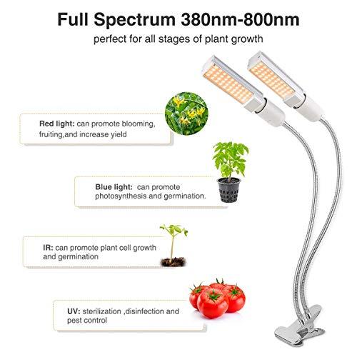 Buy indoor lights for plants