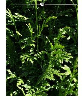 NEU in OVP Heki 1856 decovlies Wildgras Waldboden 400 x 400 x 5-6 mm