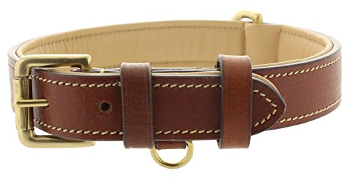 (Viosi Leather Padded Dog Collar - Made of Genuine Kingston Luxury Leather [Medium, Brown])