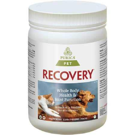 Recovery SA Powder 2.2 lb by Recovery