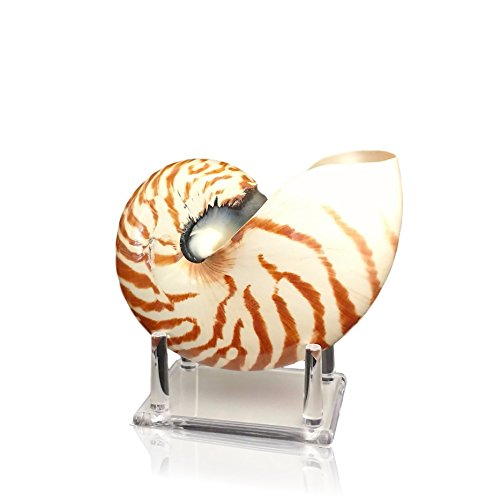 Chambered Nautilus Sea Shell With Lucite Display Stand 5 to 6 Inch - Beach Decor by Tumbler Home