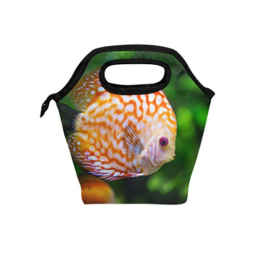 - Lunch Bag Discus Fish Sea Life Swimming Insulated Lunchbox Thermal Portable Handbag Food Container Cooler Reusable Outdoors Travel Work School Lunch Tote
