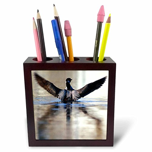 3dRose ph_91396_1 Minnesota, Common Loon Bird, Leech Lake-Us24 Pha0005-Peter Hawkins-Tile Pen Holder, 5-Inch
