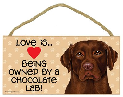 Love is being owned by a Chocolate Lab 5