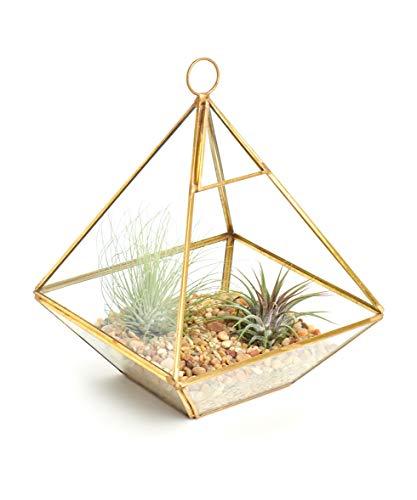 Shop Succulents Geometric Terrarium Kit   Live Air Plants Holder Decor, Gold by Shop Succulents (Image #1)