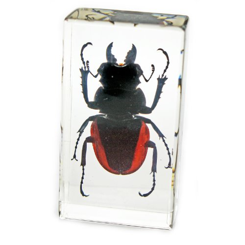 Orange Stag Beetle Paperweight (2.9x1.6x1