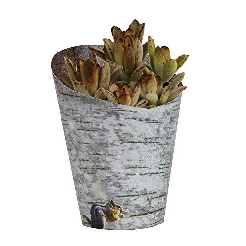 "Altman Plants Succulents Kalanchoe with Printed Birch Wood Pot wrap Perfect Gift idea 3.5"", 1 Pack"