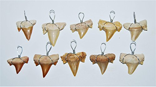 OTODUS Shark Tooth Pendant Necklace LOT OF 10 Real Fossils 1/2 to 3/4 inch Size