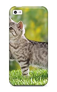 Iphone 5c Hard Back With Bumper Silicone Gel Tpu Case Cover British Shorthair Kitten