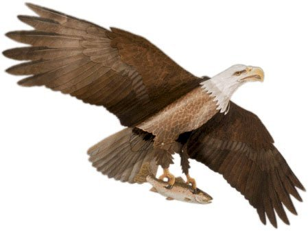 Jackite Assembled - American Bald Eagle - Assembled Bird Kite, Wind Sock