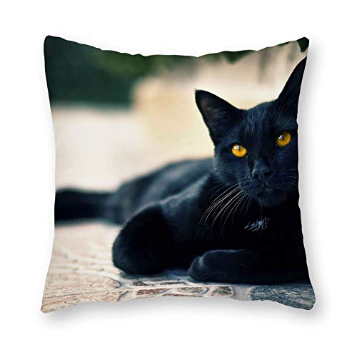 DKISEE Decorative Black Cat with Yellow Eye Seating Silently and Looking Animal Square Throw Pillow Cover Canvas Pillow Case Sofa Couch Chair Cushion Cover for Home - Seating Mlp
