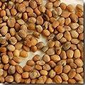 Champion Radish Seeds - Raphanus Sativus - 3 Grams - Approx 300 Gardening Seeds - Vegetable Garden Seed