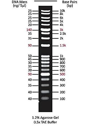 Marcador de ADN One-for All (5 x 0,5 ml): Amazon.es: Amazon.es