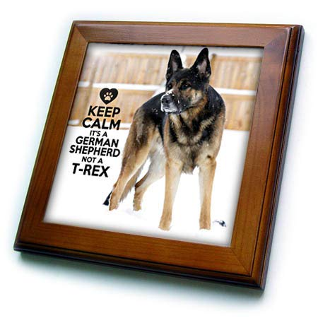 3dRose Stamp City - Typography - Keep Calm its a German Shepherd not a T-Rex on a Photo of a Shepherd. - 8x8 Framed Tile (ft_307735_1) ()
