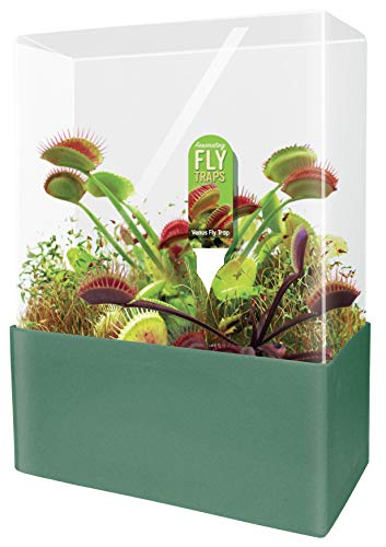 (Unique Gardener Grow Your Own Venus Fly Trap - Complete Kids Terrarium Kit to Plant Fascinating Man Eating Fly Traps - Includes Everything Needed to Get Started)