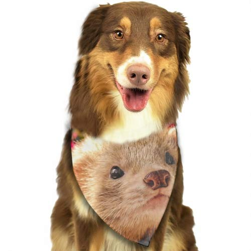 Cecil Beard Dog Bandana Triangle Bibs Lovely Ferrets Face Bright Coloured Scarfs Accessories for Pet Cats and Baby Puppies