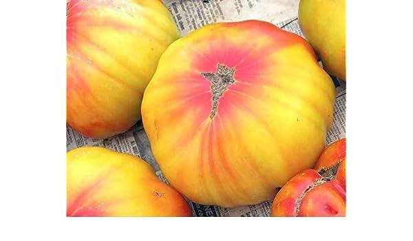 Amazon com : 5000 Seeds, or 1/2 oz Old German Tomato Vegetable Seeds