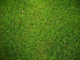 The Dirty Gardener Majestic Turf Bermuda Grass, 5 Pound