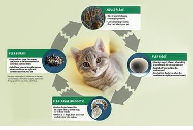 Advantage Topical Small Cat Treatment, 6 9
