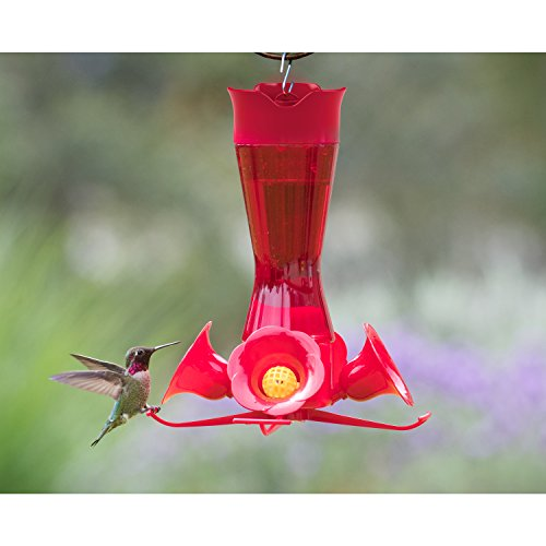 Buy hummingbird feeders best