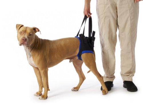 walkabout-back-pet-harness-med-large