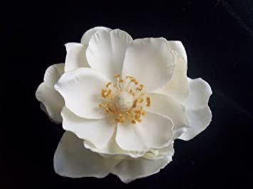 Amazon ivory white magnolia flower hair clip beauty ivory white magnolia flower hair clip mightylinksfo