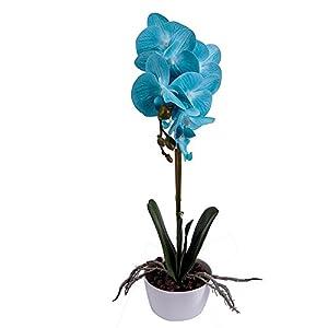 BeautiLife Phaleanopsis Orchid Artificial Flower Arrangement with Vase Decorative Long Stem Silk Fake Flower Bonsai centerpieces Home Wedding Office Decoration 2