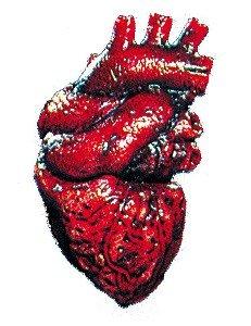 Heart Prop (Beating Heart)