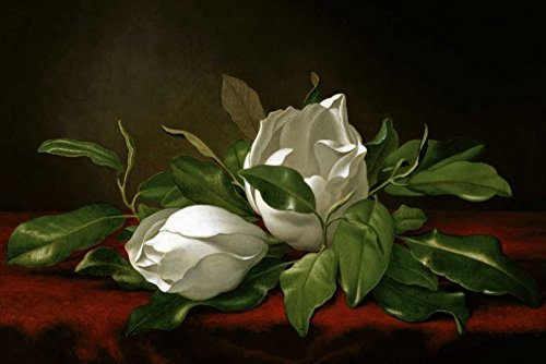 Magnolia by Martin Johnson Heade - 9