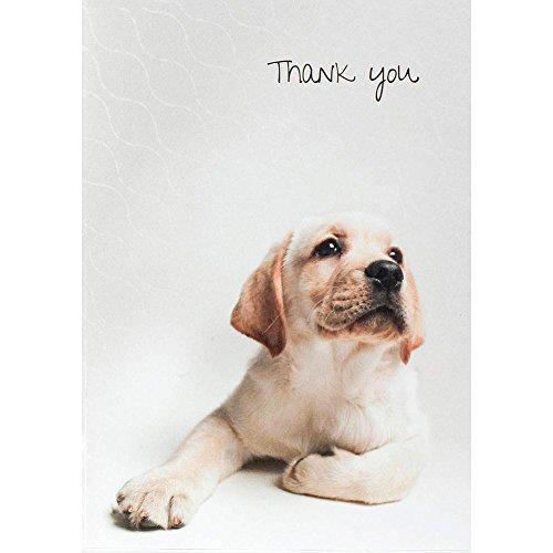 (Yellow Labrador Retriever Boxed Thank You Notecards by The Dog Studio)