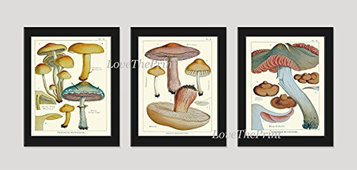 Mushroom Print Set of 3 Antique Botanical Beautiful Beige Brown Aqua Natural Colored Mushrooms Forest Nature Home Room Decor Wall Art Unframed (Gourmet Settings Frame)