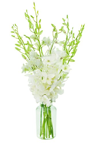 KaBloom Exotic Perla White Orchid Bouquet of 10 Fresh White Dendrobium Orchids from Thailand with - White Bouquets Orchid