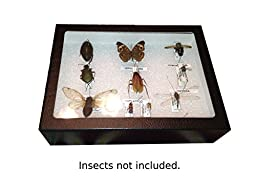 Insect Display Case, 8 x 6 x 3 with glass top