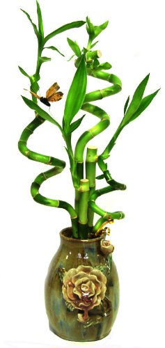 GoGoGreen88 - 5 Stems Spiral Lucky Bamboo in Handmade Rose Vase by  (Image #1)