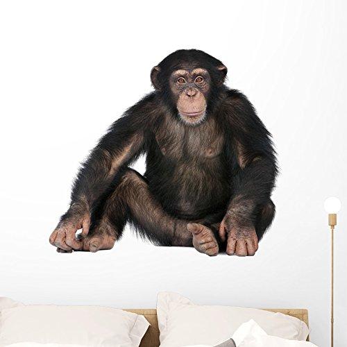 Pet Chimpanzee - 2