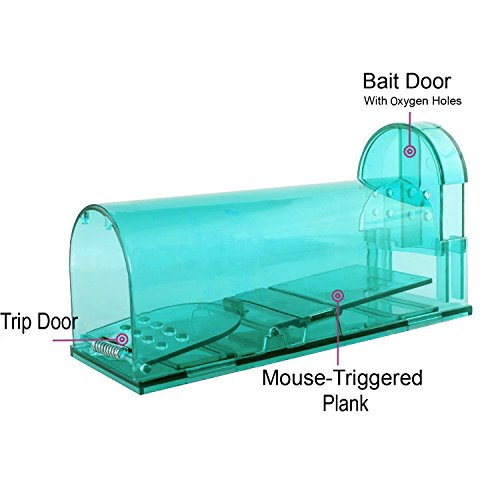 Buy what is the best food to put in a mousetrap